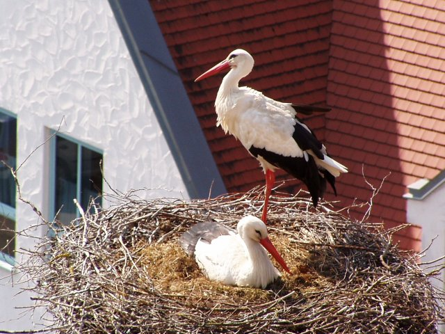 Storch 2011